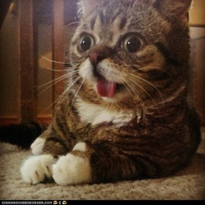 Cyoot Kitteh of teh Day: HERPA DERP