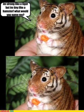 hamster or a tiger?