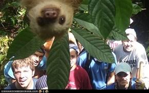 Photobombing Sloth
