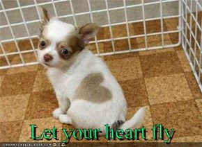 Let your heart fly