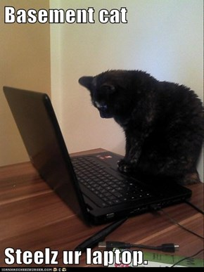 Basement cat   Steelz ur laptop.