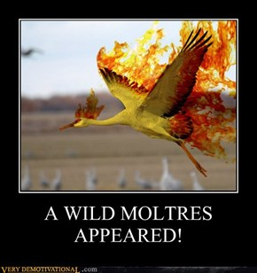 A WILD MOLTRES APPEARED!