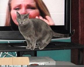 Live Feline Dubbing