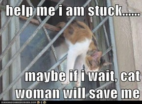 help me i am stuck......  maybe if i wait, cat woman will save me