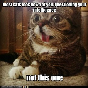 Lolcats: most cats look down at you