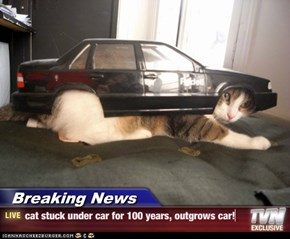 Breaking News - cat stuck under car for 100 years, outgrows car!