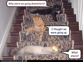 Why were we going downstairs?