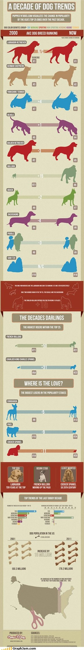 Dog Breed Infographic