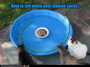 How to tell when your human sucks...