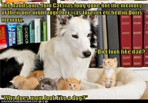 """The handsome Tom Cat was long gone but the memory of their one night together was forever etched in Doris' memory. """"Do I look like dad?"""" """"Why does mom look like a dog?"""""""