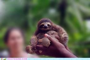 That Sloth Life