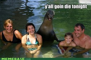 Killer Seal