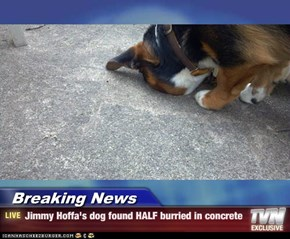 Breaking News - Jimmy Hoffa's dog found HALF burried in concrete