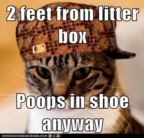 2 feet from litter box  Poops in shoe anyway