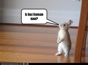 Iz bez human nao?