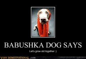 BABUSHKA DOG SAYS