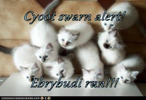 Cyoot swarn alert!  Ebrybudi run!!!