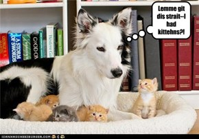 Lemme git dis strait--I had kittehns?!