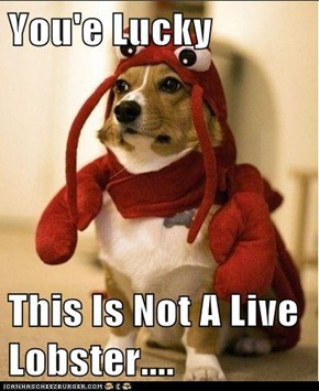 You'e Lucky   This Is Not A Live Lobster....