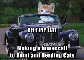 DR TINY CAT Making a housecall                               to Romi and Herding Cats
