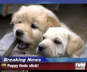 Breaking News - Puppy finds stick!