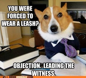 Animal Memes: Lawyer Dog - The Collar Was Bad Enough