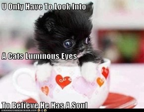 U Only Have To Look Into A Cats Luminous Eyes To Believe He Has A Soul