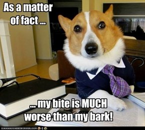 My bark