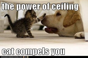 the power of ceiling  cat compels you