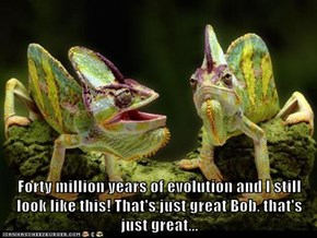Forty million years of evolution and I still look like this! That's just great Bob, that's just great...