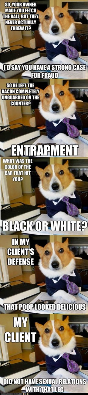 Animal Memes: Meet Lawyer Dog