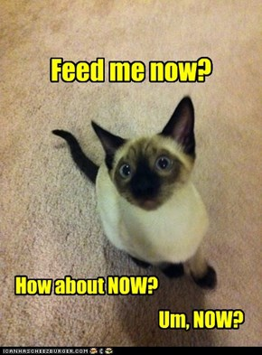 Feed me now?