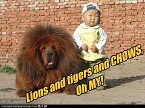 Lions and tigers and CHOWS,Oh MY!