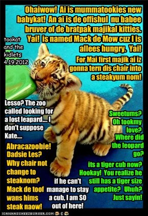 Ohaiwow!  Ai is mummatookies new babykat!  An ai is de offishul  nu babee bruver of de bratpak majikal kitties. Yai!  is named Mack de Mow cuz I is         allees hungry.  Yai!