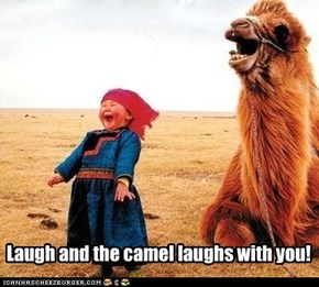 Laugh and the camel laughs with you!