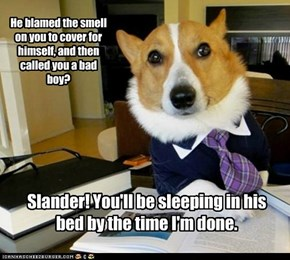 Lawyer Dog: My Client Is a Good Boy. Yes He Is.