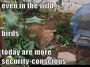 even in the wild,  birds  today are more                                  security-conscious