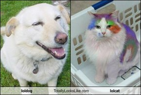 loldog Totally Looks Like lolcat