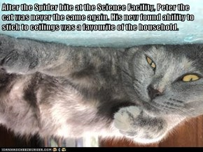 After the Spider bite at the Science Facility, Peter the cat was never the same again. His new found ability to stick to ceilings was a favourite of the household.