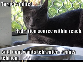 Target sighted. Hydration source within reach. But I dont wants teh water, I wants teh nom.
