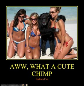 AWW, WHAT A CUTE CHIMP