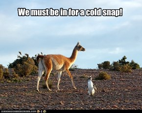 We must be in for a cold snap!