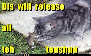 Dis  will  release    all teh                  tenshun