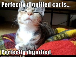 Perfectly dignified cat is...  Perfectly dignified.