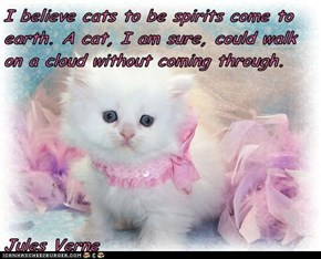 I believe cats to be spirits come to earth. A cat, I am sure, could walk on a cloud without coming through.  Jules Verne