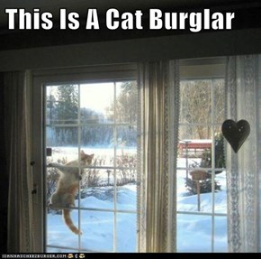 This Is A Cat Burglar