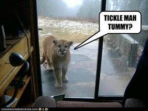 Even Big Cats Want to Be Let In Sometimes
