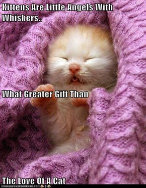 Kittens Are Little Angels With Whiskers.. What Greater Gift Than The Love Of A Cat