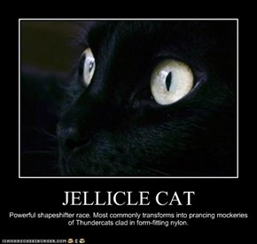 JELLICLE CAT