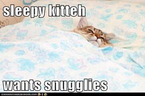 sleepy kitteh  wants snugglies